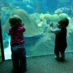 Florida Aquarium – Fun for the Littlest Explorer