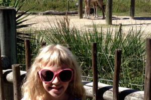 Lowry Park Zoo Safari