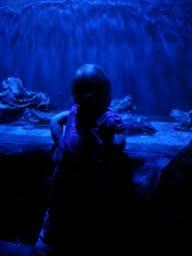 bluebailey