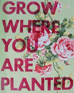growwhereyouareplanted