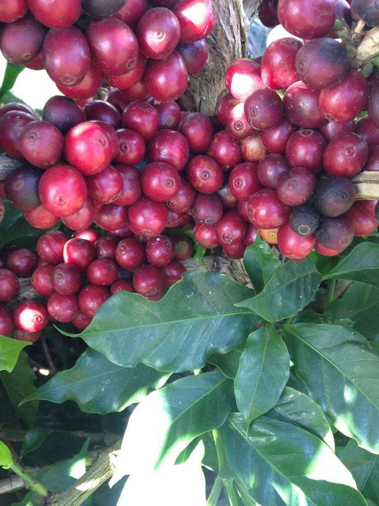 coffee-648219_1280