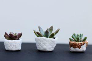 succulent-pots