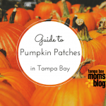 Ultimate Guide to Pumpkin Patches in Tampa Bay