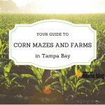 Guide to Fall Corn Mazes and Farms in Tampa Bay