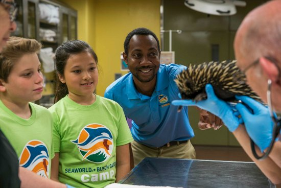 Busch Gardens Summer Camps Why My Family Loves Them