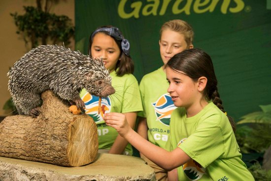 Busch Gardens Summer Camps - Why My Family Loves Them on Tampa Bay Moms Blog