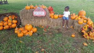 Sweetfield Farm