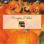 2018 Guide to Pumpkin Patches in Tampa Bay