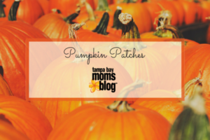 Guide to Pumpkin Patches in Tampa Bay | Tampa Bay Moms Blog