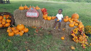 toddler at pumpkin patch
