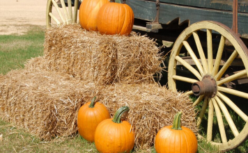 pumpkins on hay next to wagon