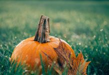 pumpkin and leaf in the grass